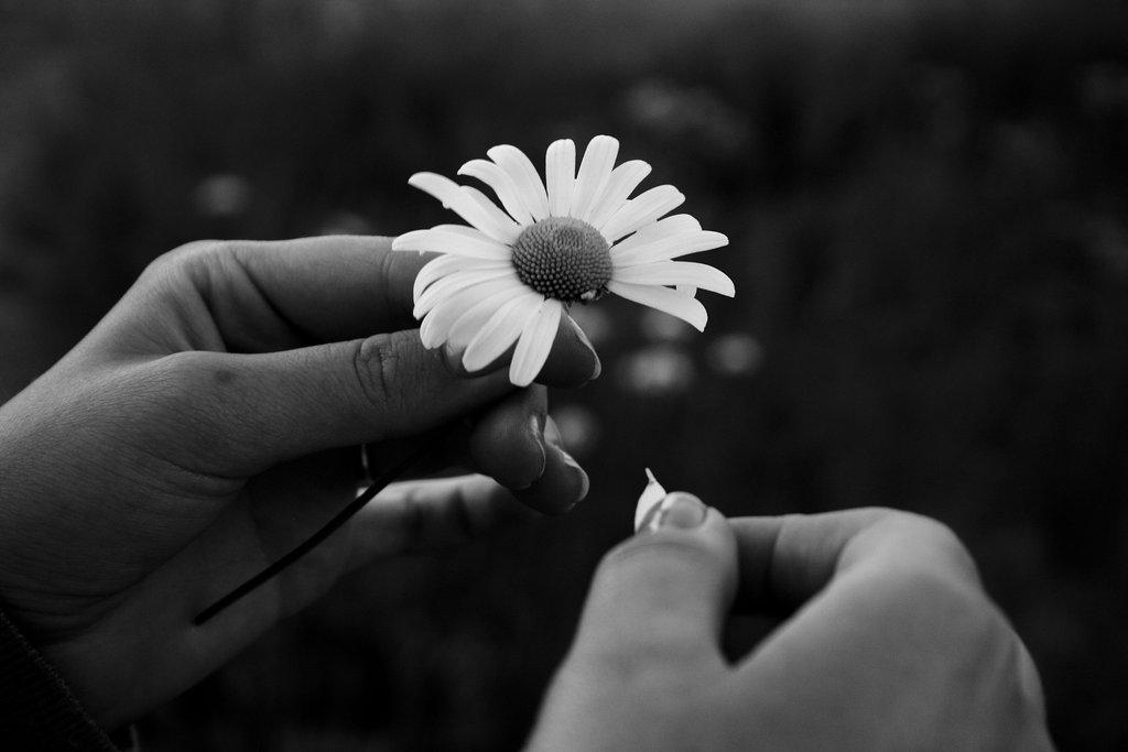 Nos amies les fleurs (Symbolisme) Marguerite